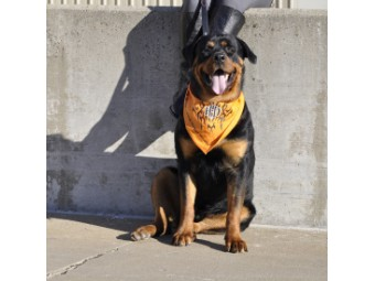 Bandana für Hunde