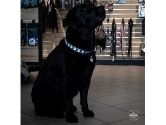 Hundehalsband, Bar & Shield, Harley-Davidson, Schwarz