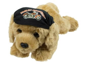 H-D Golden Retriever Freedom